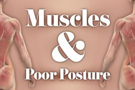 Muscles Poor Posture