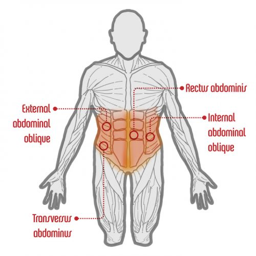 CoreMuscles